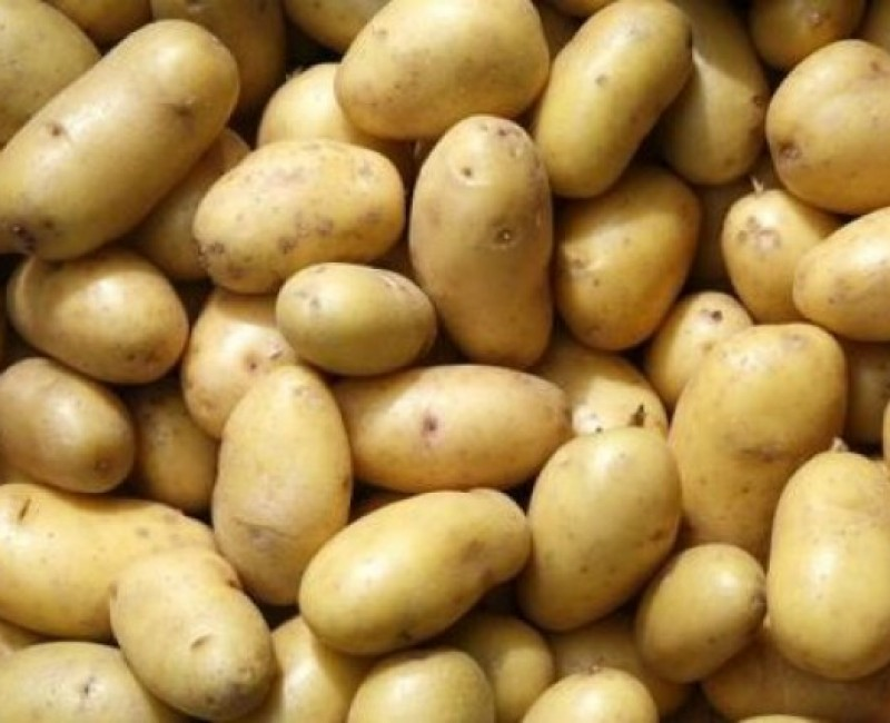 Potato Equipment Manufacturer